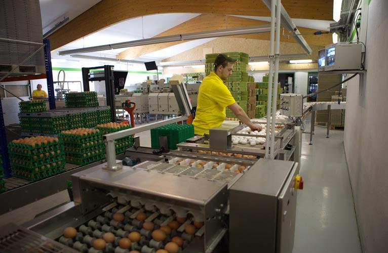 Nun werden die Eier von einem Mitarbeiter vorsortiert.