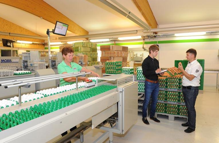 Die Höcker à 30 Eier werden zum Verpacken auf die Maschine gestellt.