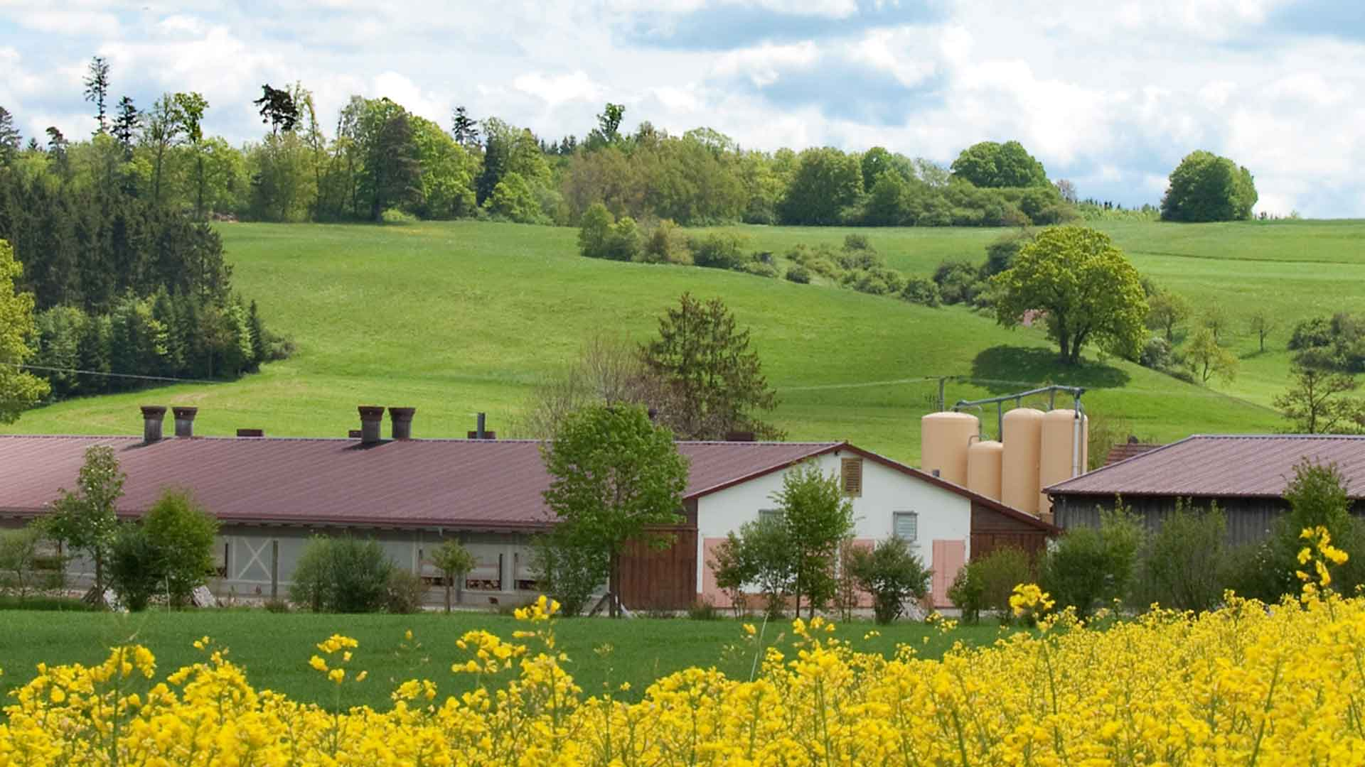 Der Steinefurthof und das naheligende Rapsfeld